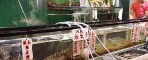 九龍城(竹園)富国海鮮飯店の水槽